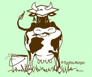 graduate cow